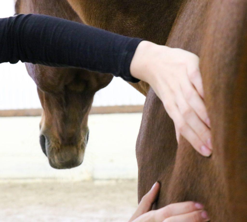 Massage équin